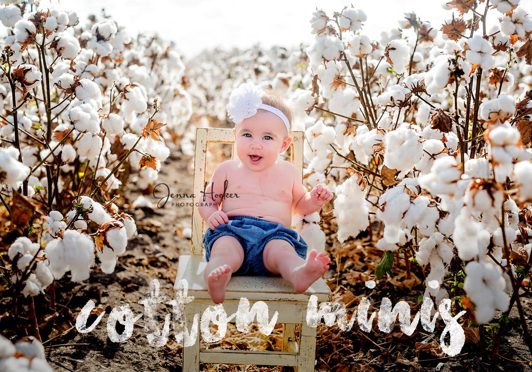 cotton mini.jpg