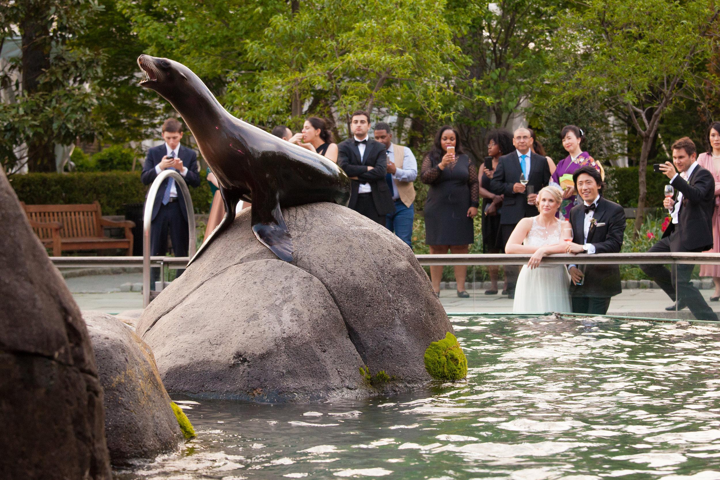 victorious-events-nyc-029-colleen-taka-central-park-zoo-wedding-raymond-hamlin.jpg