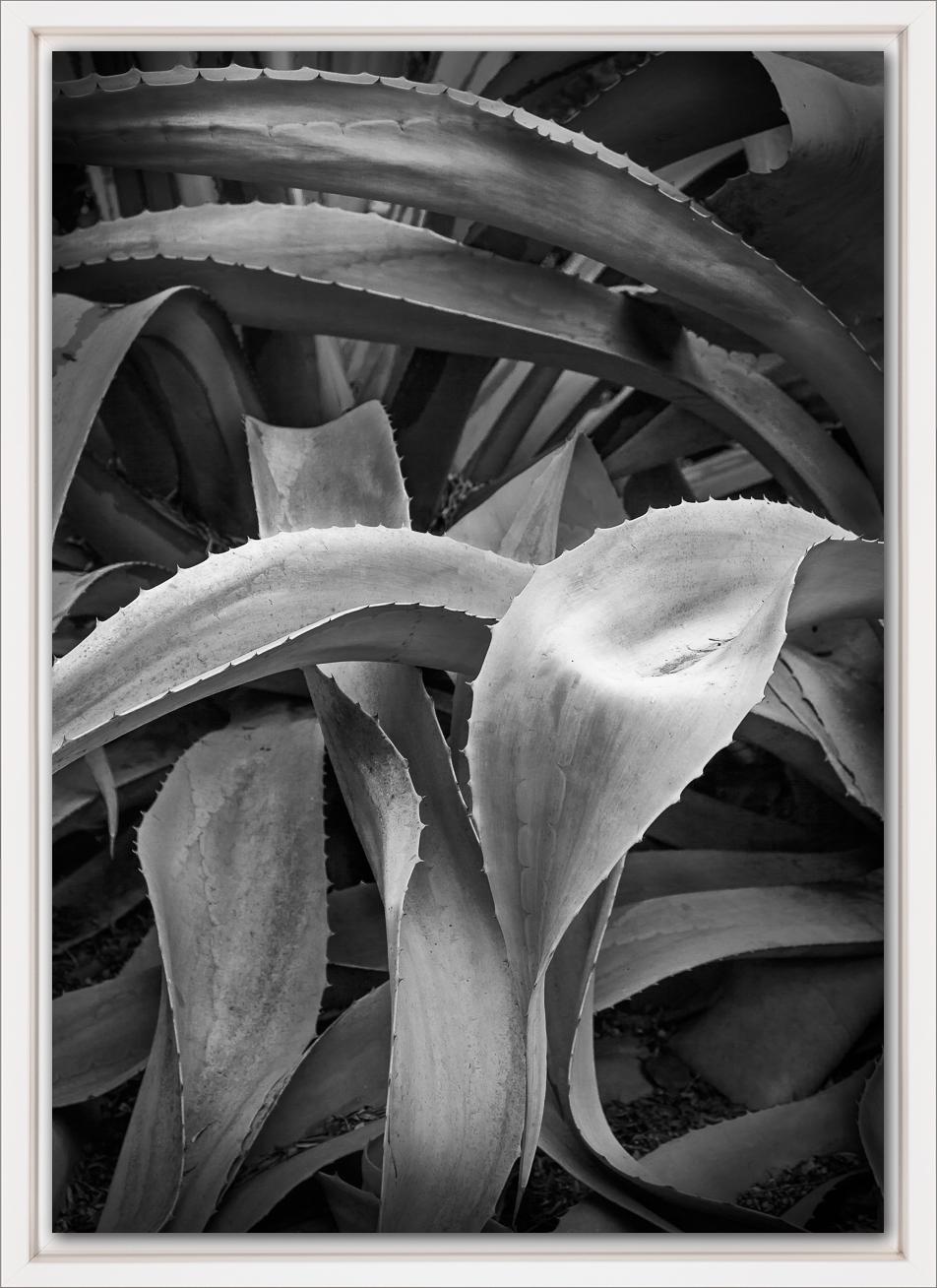 No. 1.3 White.jpg