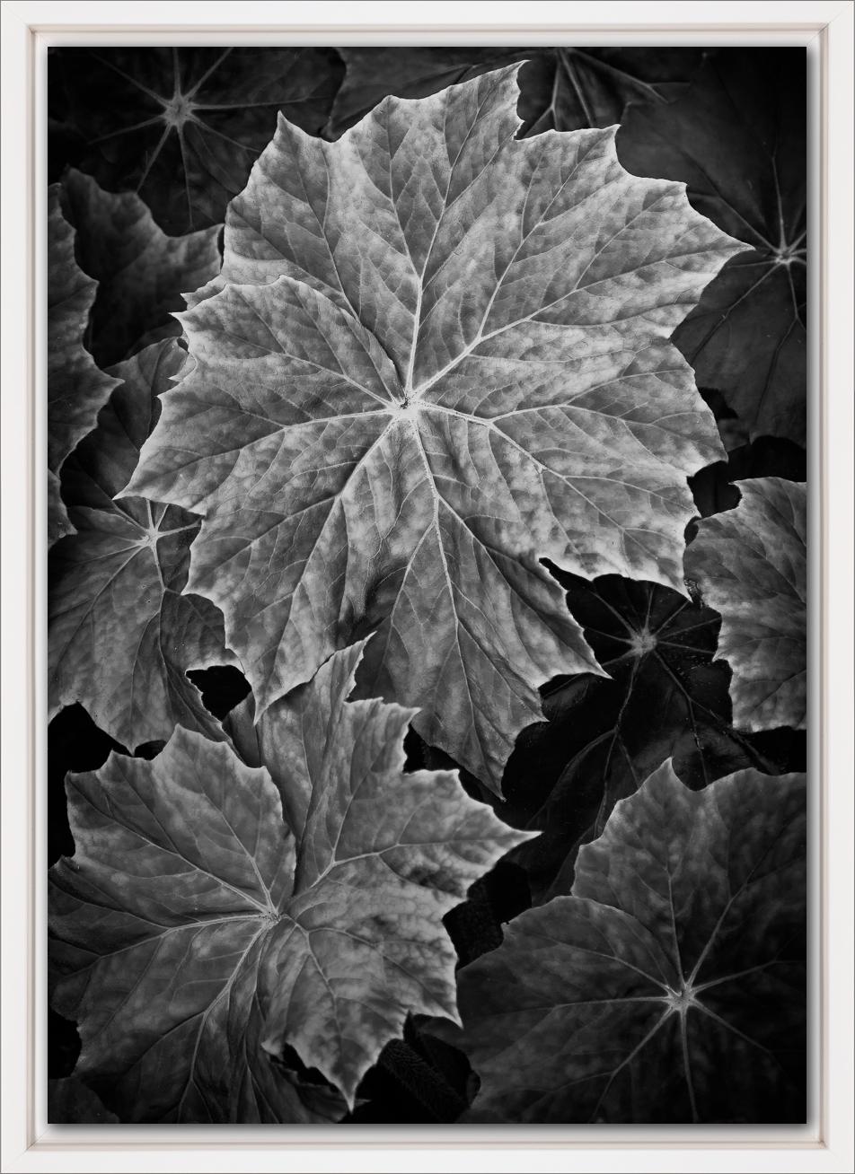 No. 1.7 White.jpg