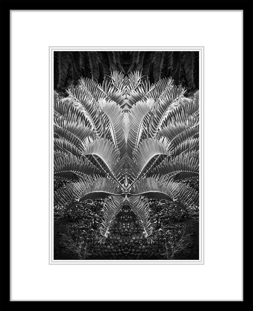 Cycad (Large Classic)