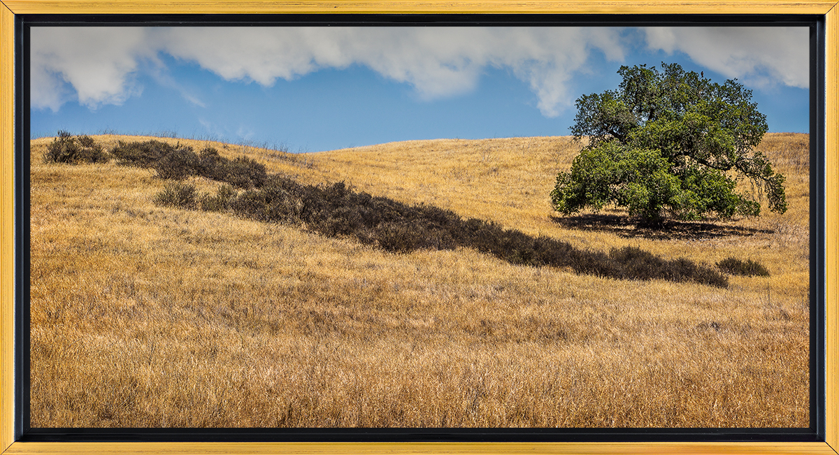 Lone Oak with Gray Stripe.jpg