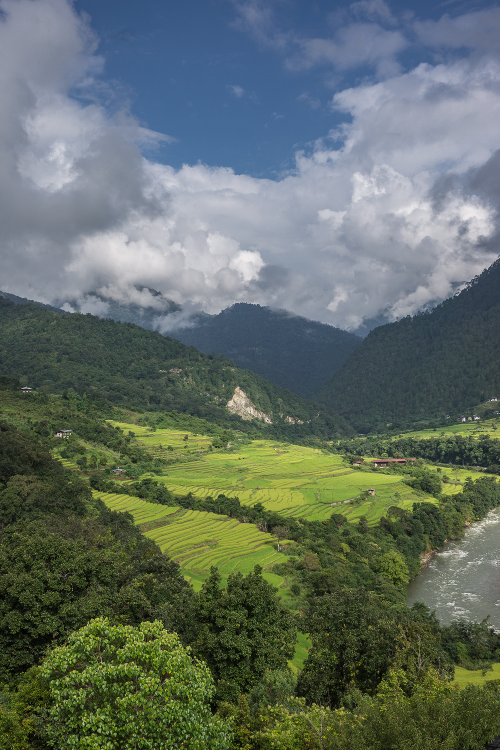 punakha-fields.jpg
