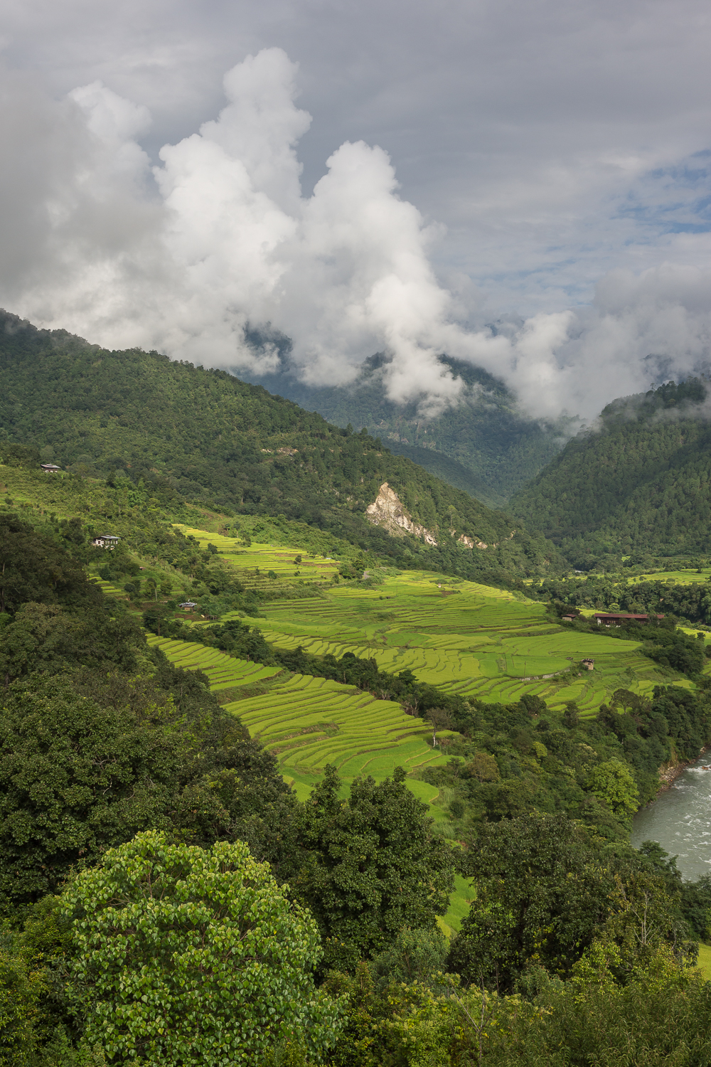punakha-rice-fields.jpg