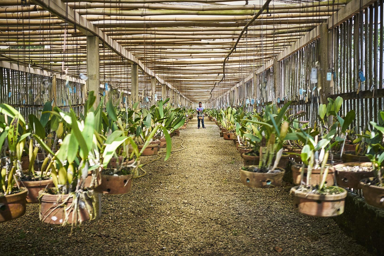 Romário e mais um cuidam de todos os mais de 27000 vasos do Orquidário
