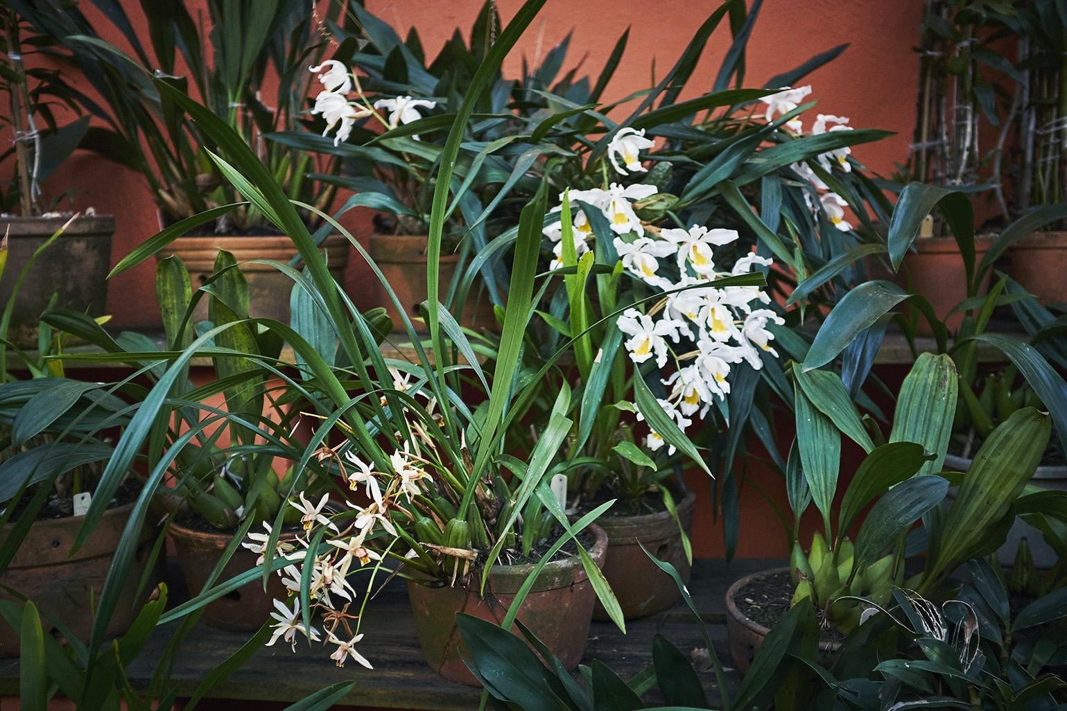 Visitei o Trisca e seu jardim no inverno, época em que as orquídeas hibernam. Haviam poucas floridas.
