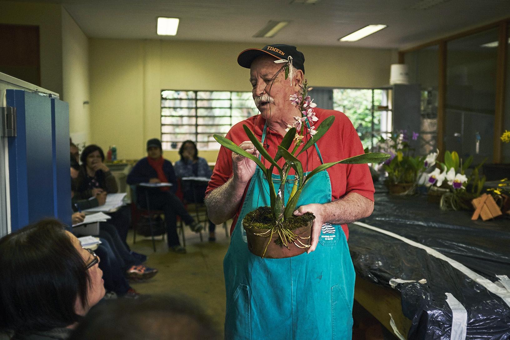 Ensinando a tratar as doenças típicas da orquídeas.