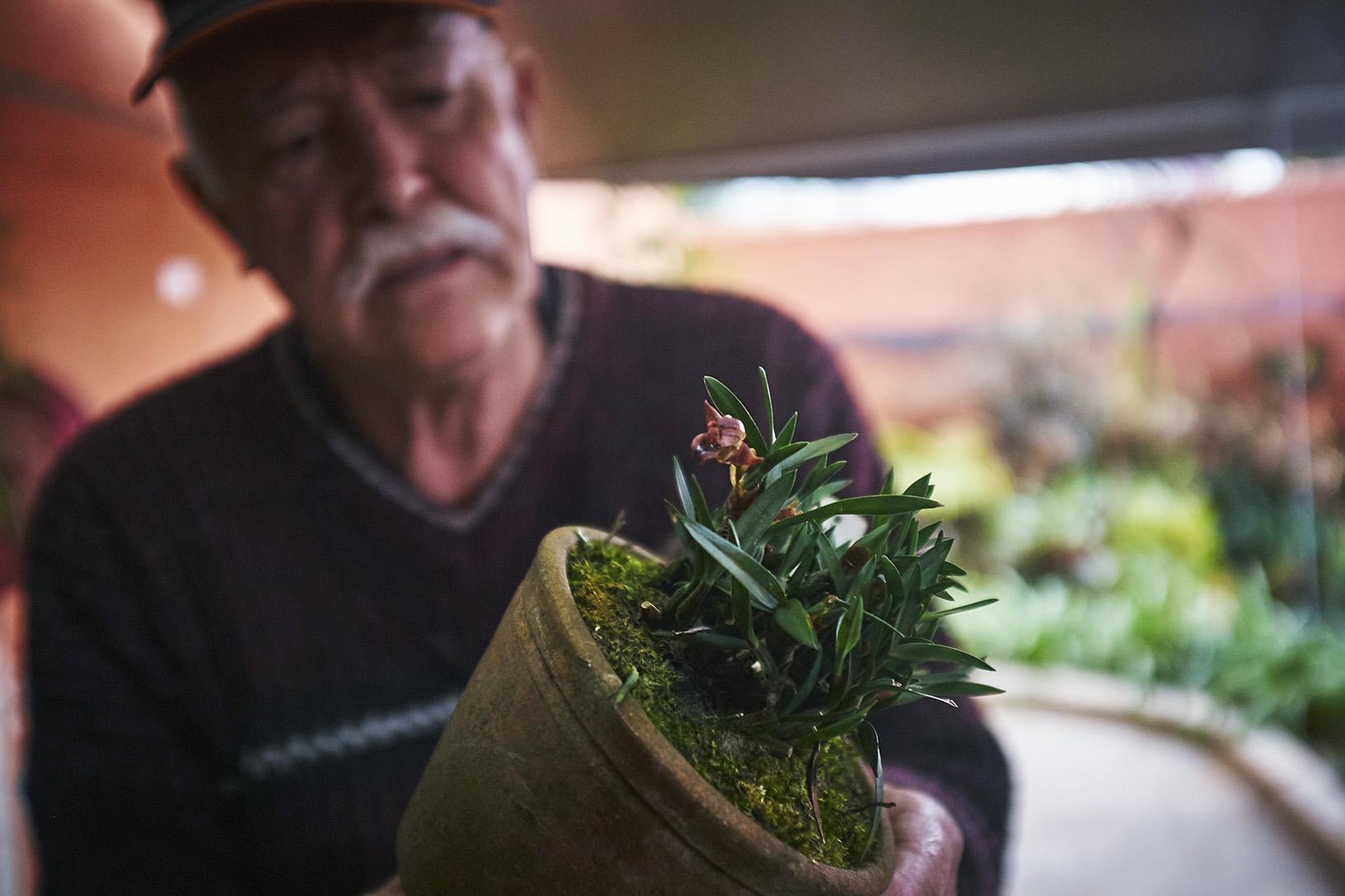 Uma mini orquídea (preciso perguntar o nome) do acervo pessoal do Trisca.