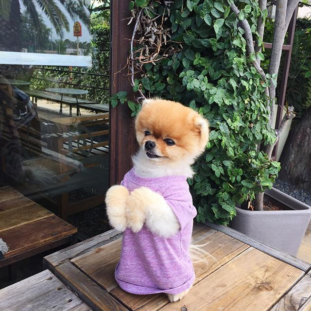 @jiffpom stopped by today 💅