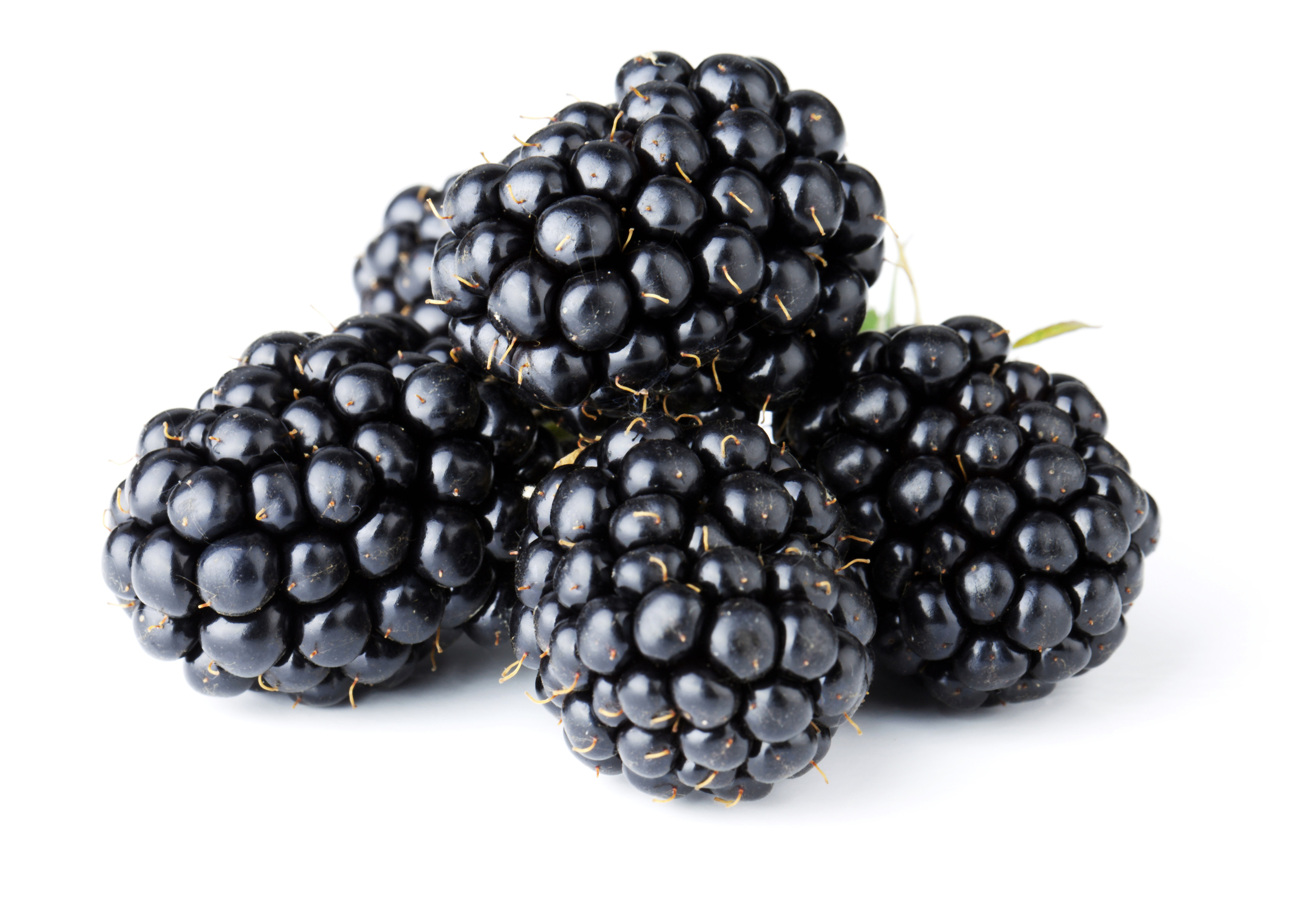 Blackberry -