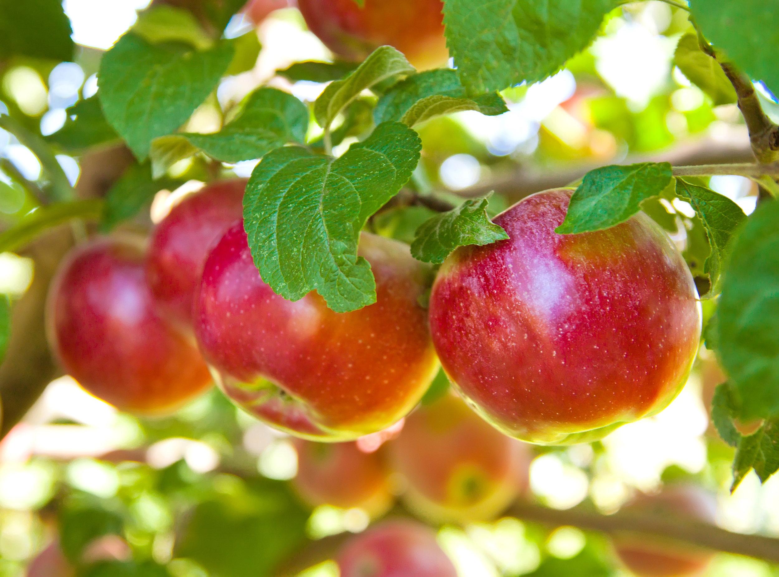 Seasonal Ingredient - Here is what's in season!
