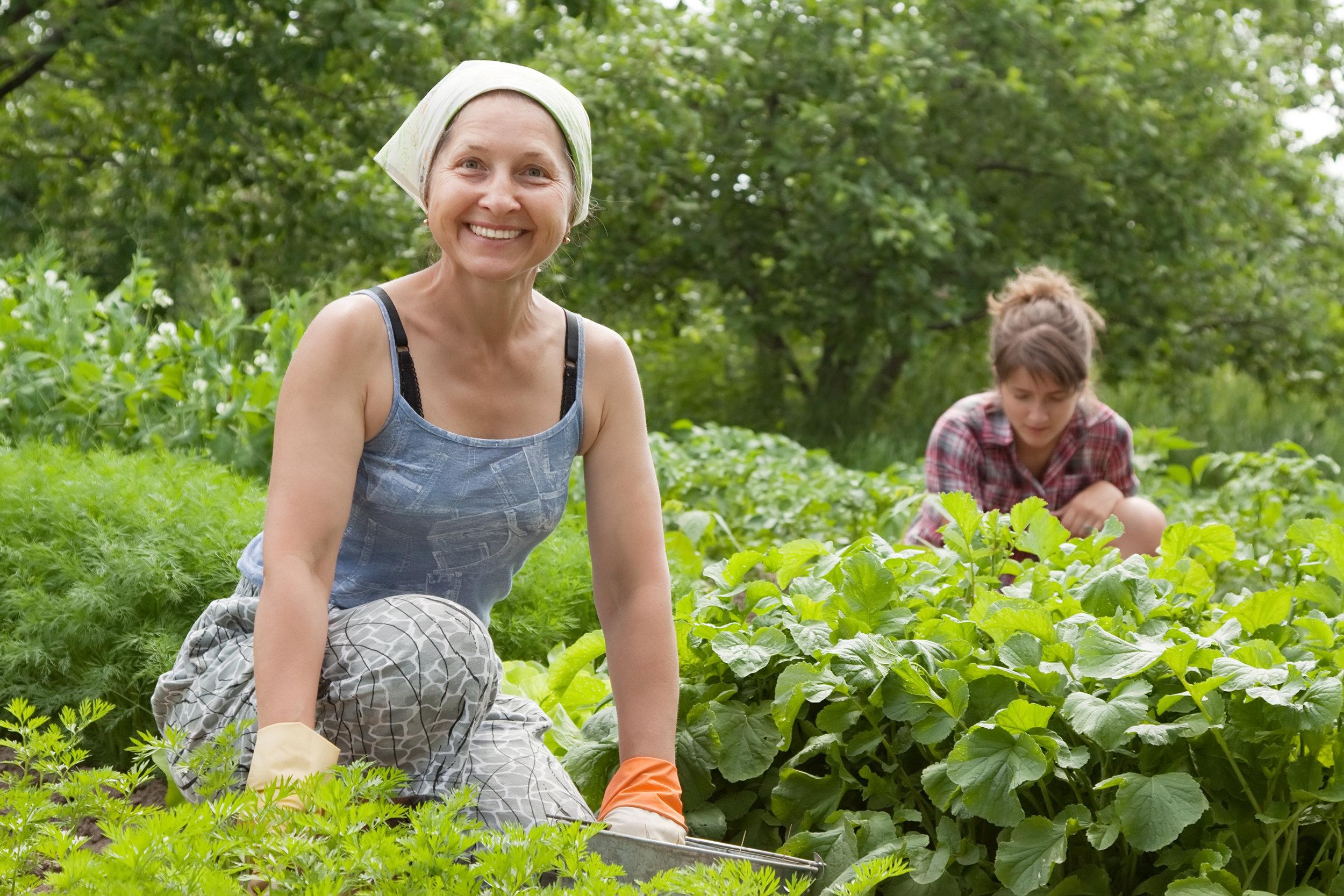 Haute Farms Blooming prairie food coop.jpg