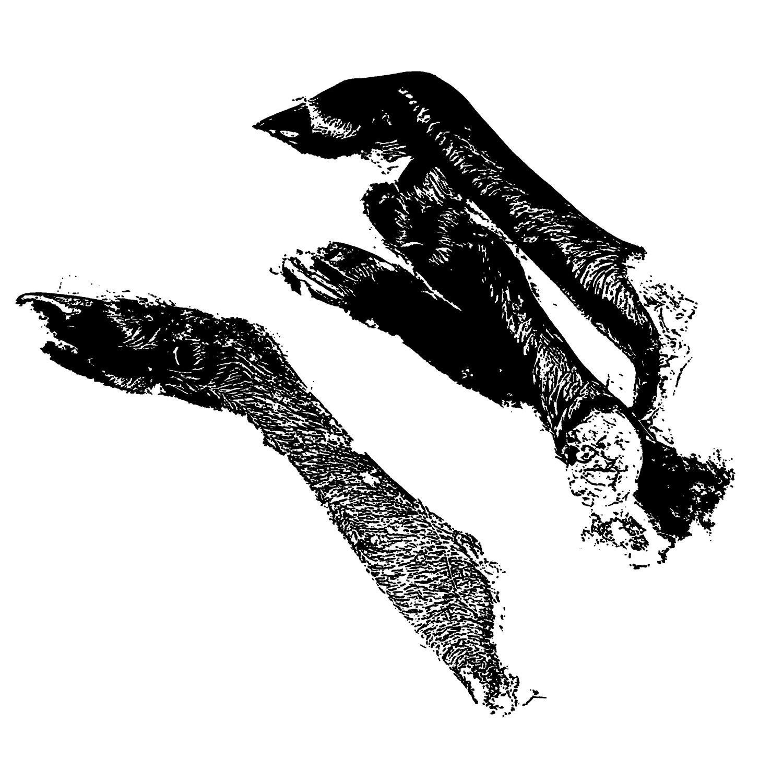 ropson-shanks-logo.jpg