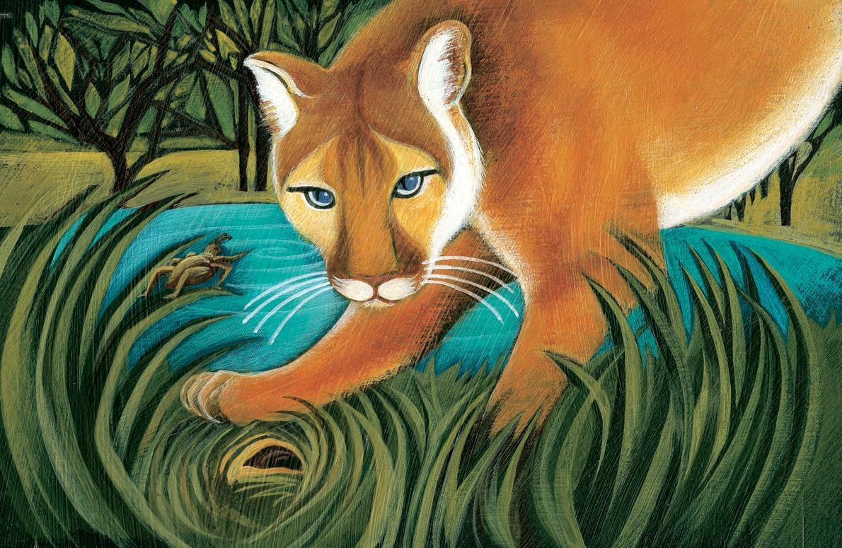 Cougar copy 4.jpg