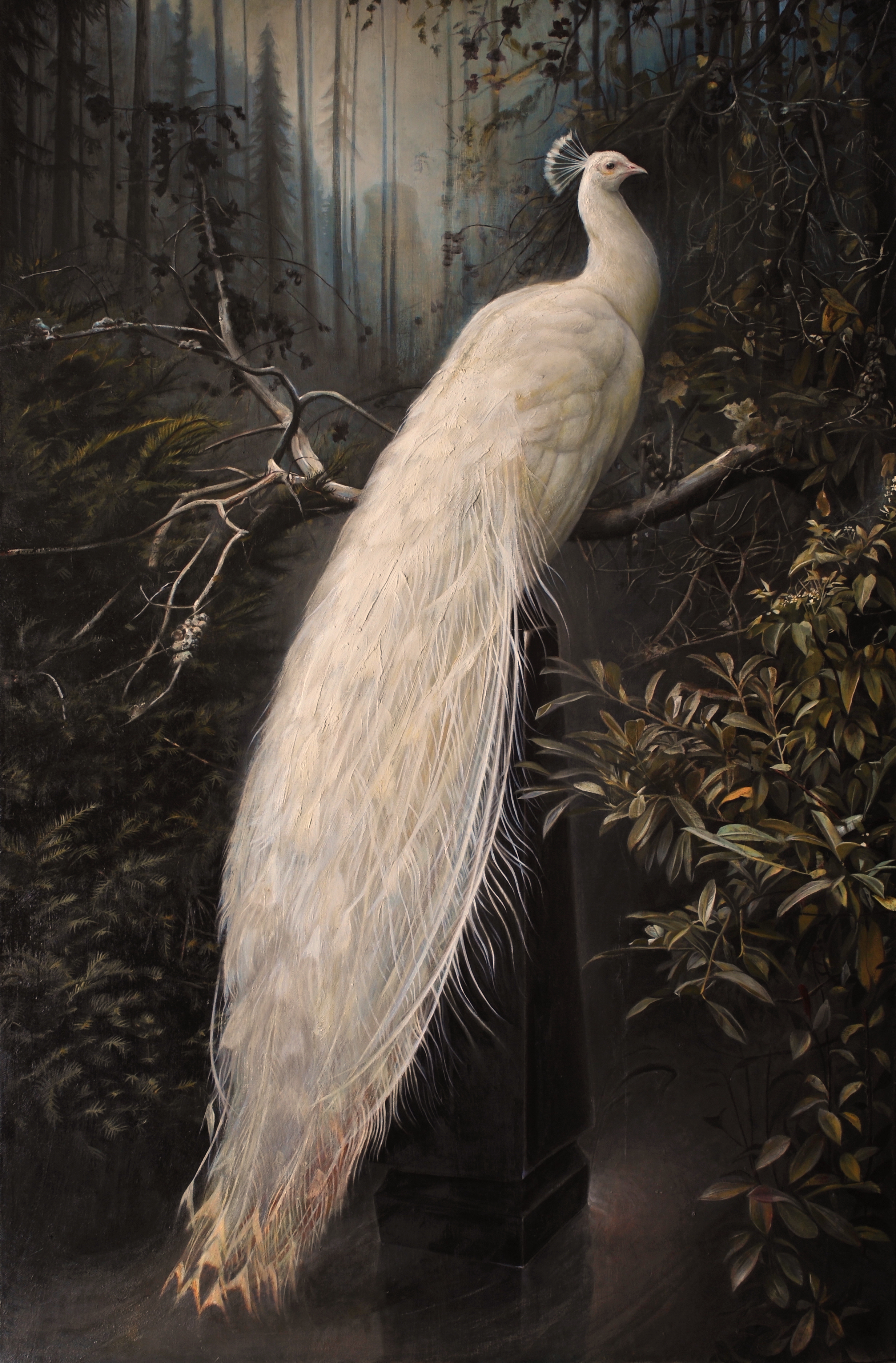 """Forest Peacock  