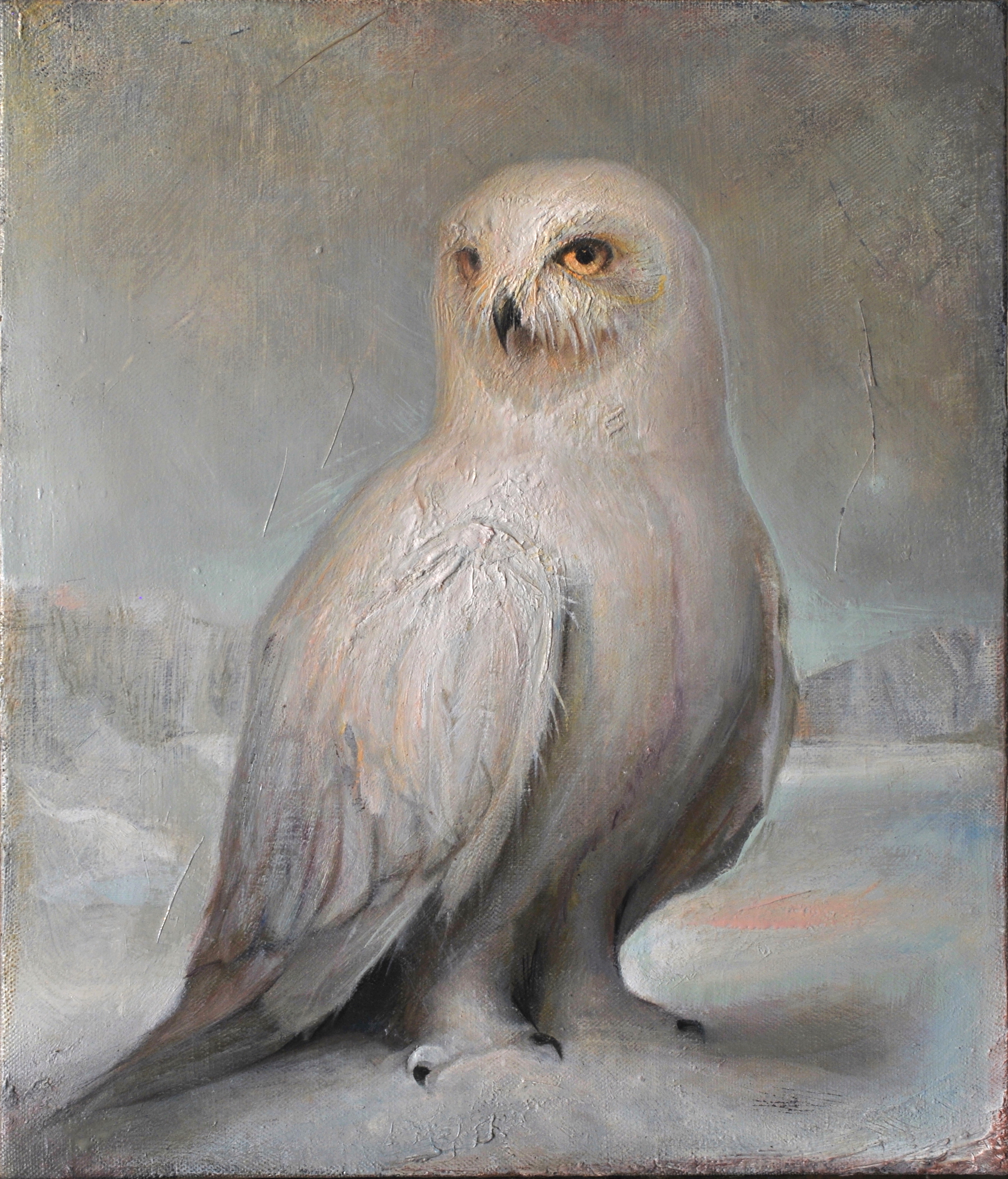 "Snowy Owl  |  14"" x 12"""