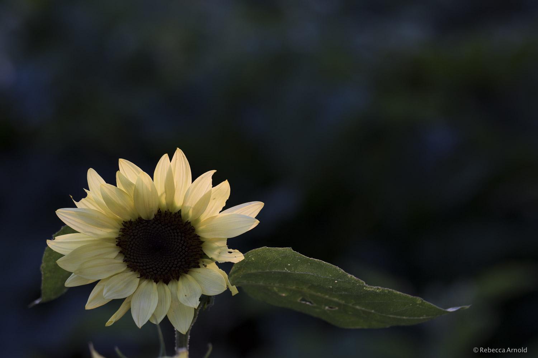 Pale Yellow, NY, USA