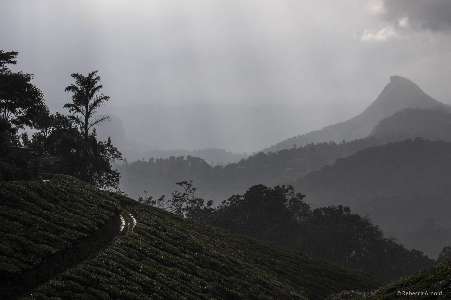 Tea Hills of Munnar, India