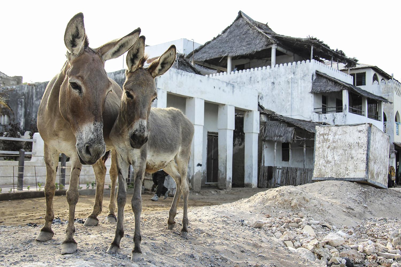 Donkey Watch, Kenya