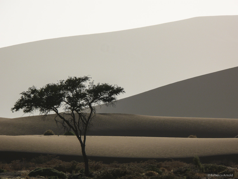 Acacia & Dunes, Kalahari Desert, Namibia