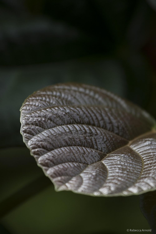 Leaf Architecture, India
