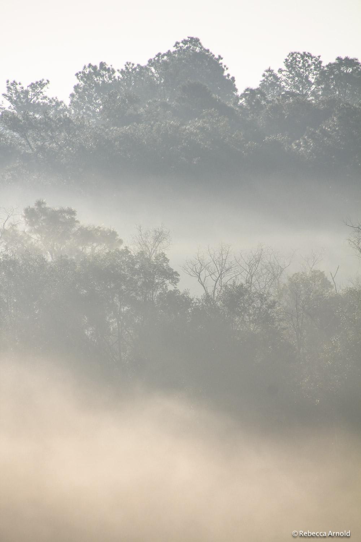 Morning Mist, Florida, USA
