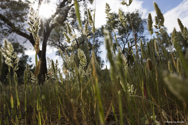 Spring Grass, Italy