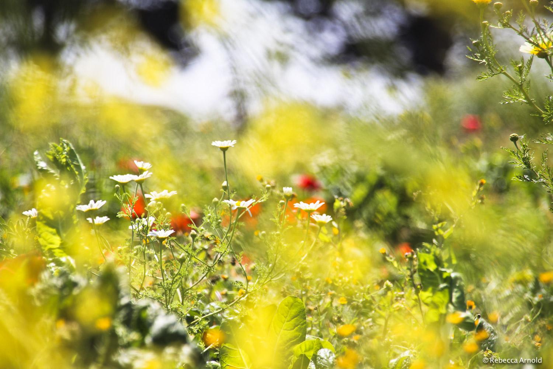 Flower Dreams, Italy