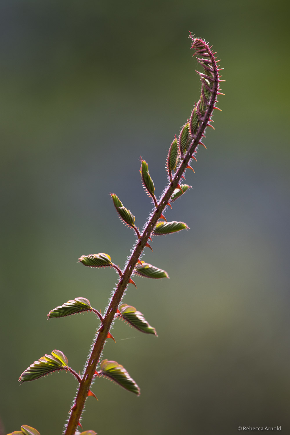 "Unfurling, India 2015  16"" x 24"" 