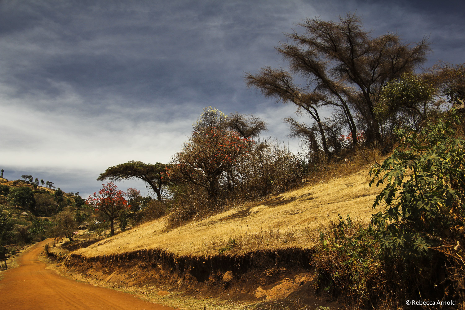 "Acacia Trail, Uganda 2011  16"" x 24"" 