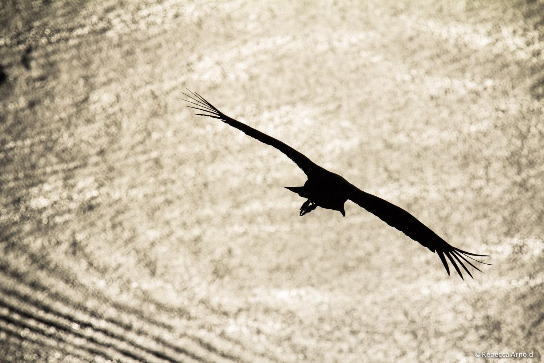 49. Soaring, Botafogo Bay, Brazil 2013