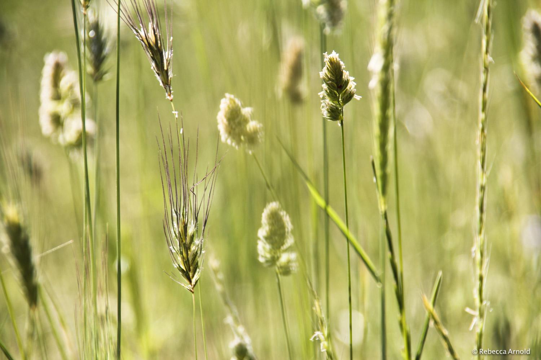 15. Wild Summer Grass, Italy, 2012