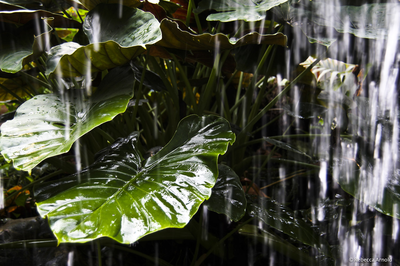 6. Tropical Rains, Austria 2012
