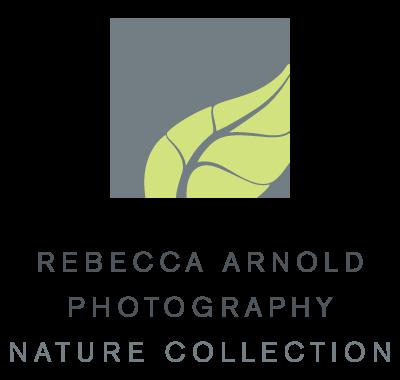 RAP_Nature_logo_rgb.png