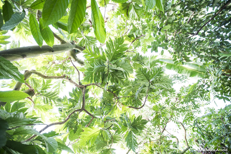 9. Botanical Canopy, NY USA 2018