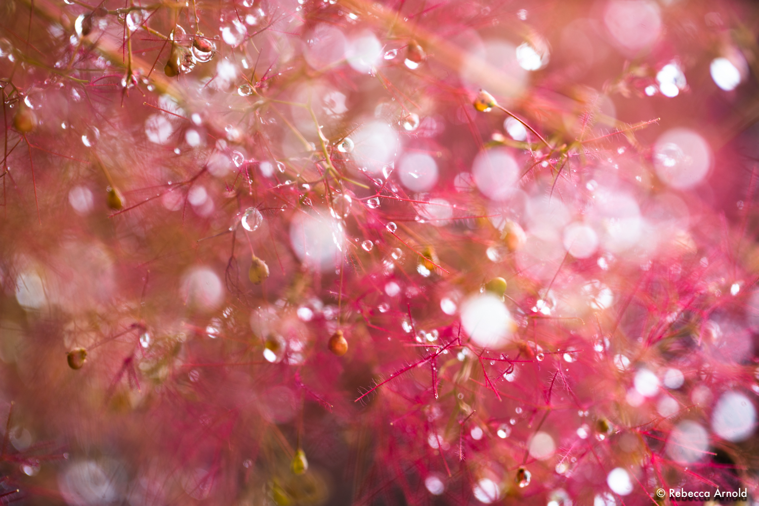 """A Bubble Party, Michigan, USA 2018  16"""" x 24"""" 
