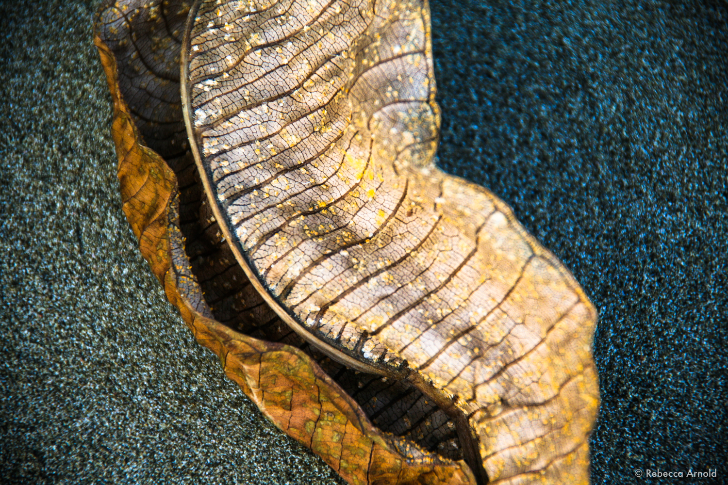 """Gold Leaf, Nicaragua 2009  16"""" x 24"""" 
