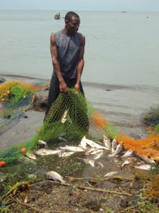 Fisherman catching undersized Nile perch on Mfangano Island, Kenya from  Erin Milner 's (GHE '13) research assessing the impacts of ecological changes in Lake Victoria on livelihoods and child nutrition.