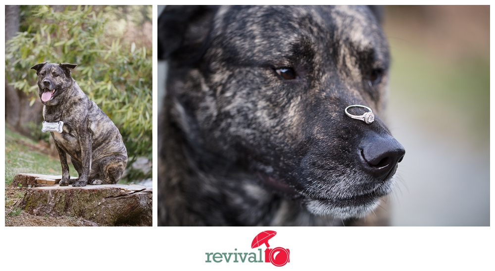 Dog Wedding Announcement Photos by Revival Photography