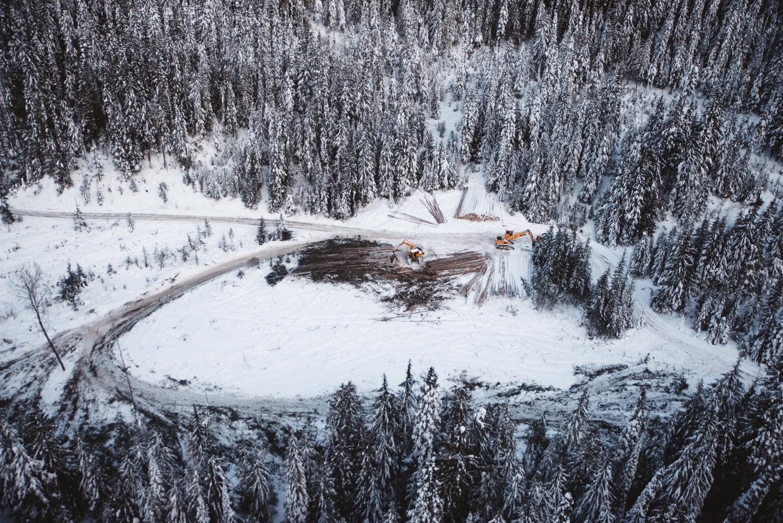 Active logging in mountain caribou habitat. Photo credit: Nathaniel Atakora