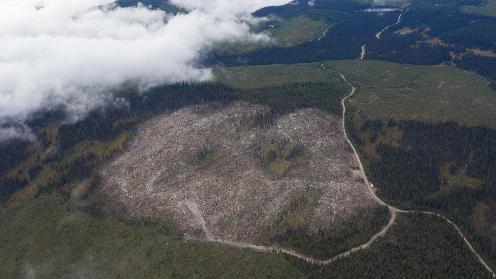 A fresh clearcut in federally-mapped, core critical habitat of endangered mountain caribou - Wells Gray/Thompson area. Photo credit: Wildlife Defence League/ Burning Hearts Media