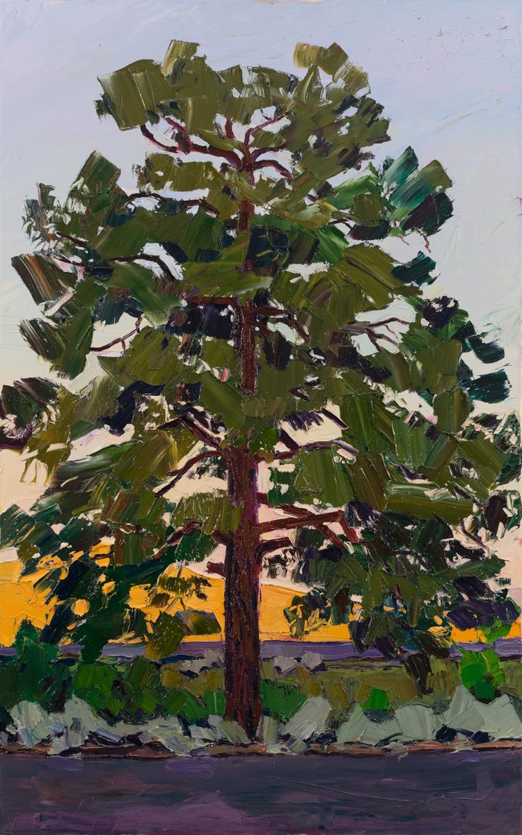 Lone Tree #5 - sunrise shadow