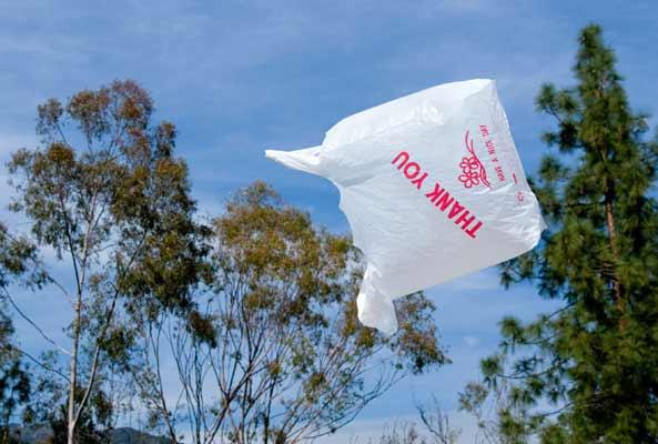 I'm going to focus, wait... plastic bag, plastic bag, plastic bag...