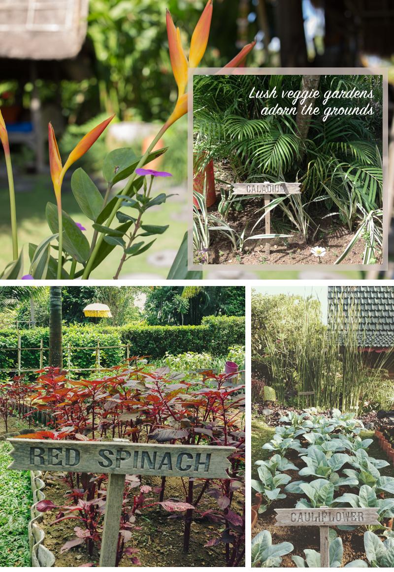 Gardens, gardens everywhere