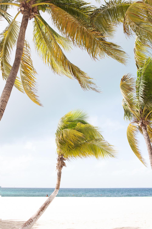 Gentle breezes on the island
