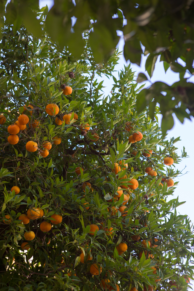 The sweet smell of citrus in the air