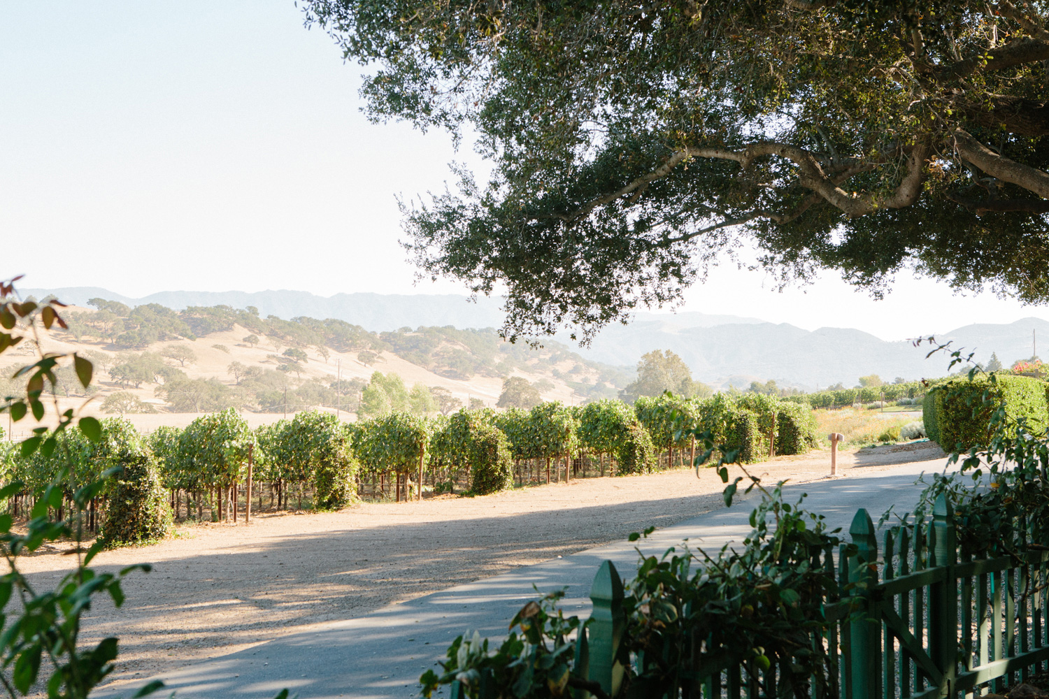 DestinationEnvy-Solvang-RusackVineyard-9620