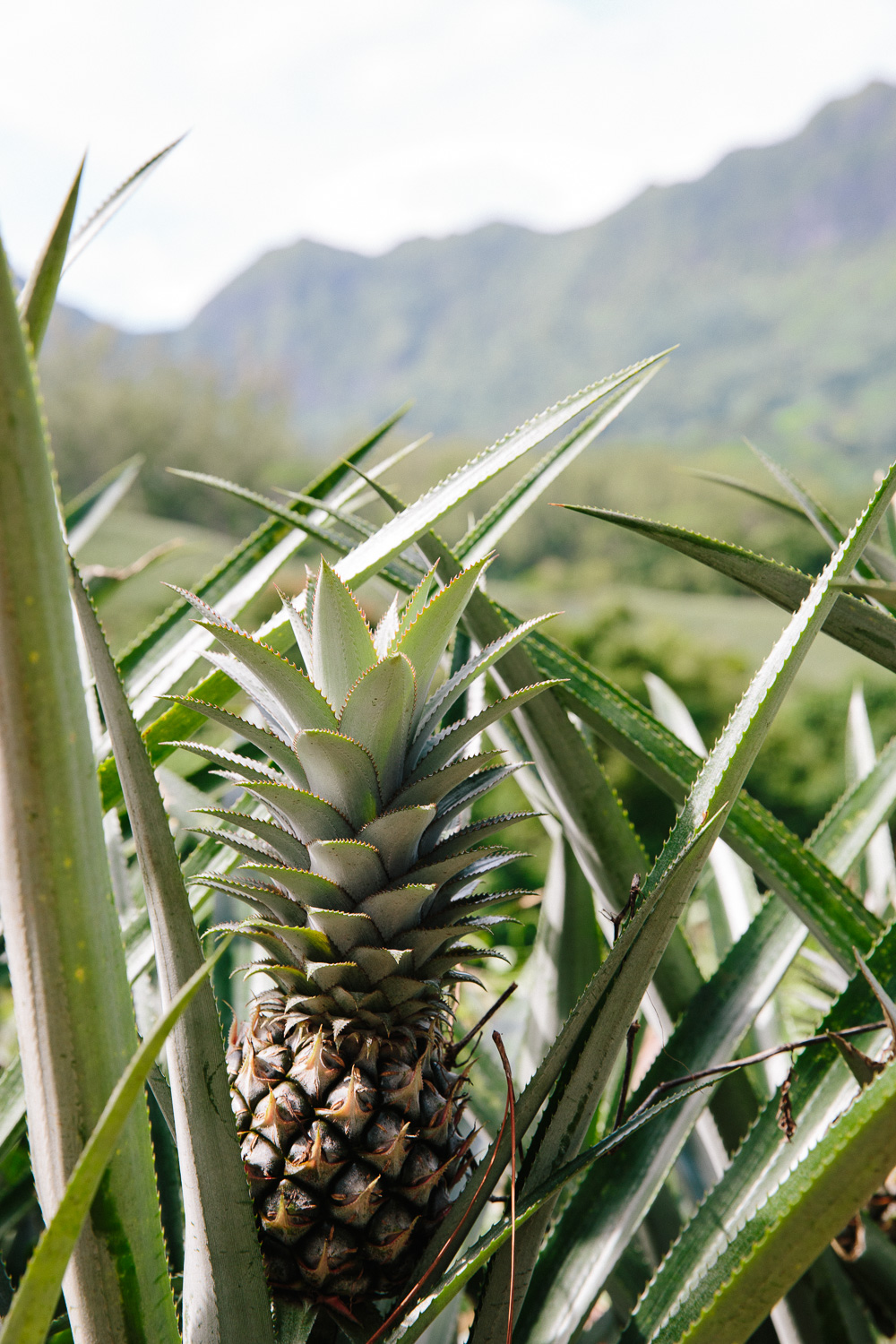 NatashaLee-DestinationEnvy-Moorea-pineapple-3222.jpg