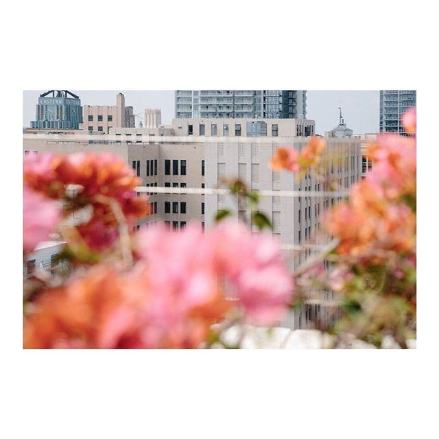 Love calling this city my home . . . . #losangeles #downtownlosangeles #dtla #iamatraveler #cntraveler #traveldeeper #lifeandthyme #travelphotographer #californialove #californialife #happeningindtla #ladowntowner #passionpassport #losangelesphotographer #lastory #discoverla #Bougainvillea #losangeleslife #athomeintheworld #guardiantravelsnaps #bbctravel #mytinyatlas #stayandwander #cerealmagazine