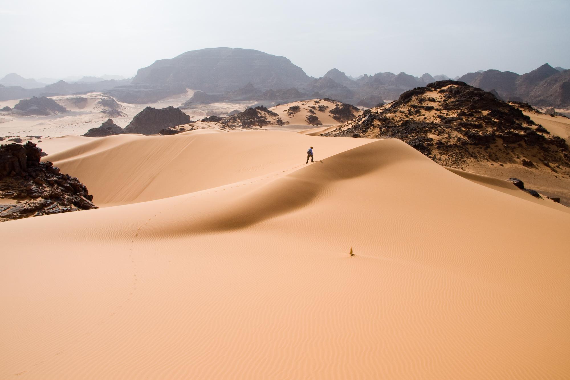 tropical desert.jpg